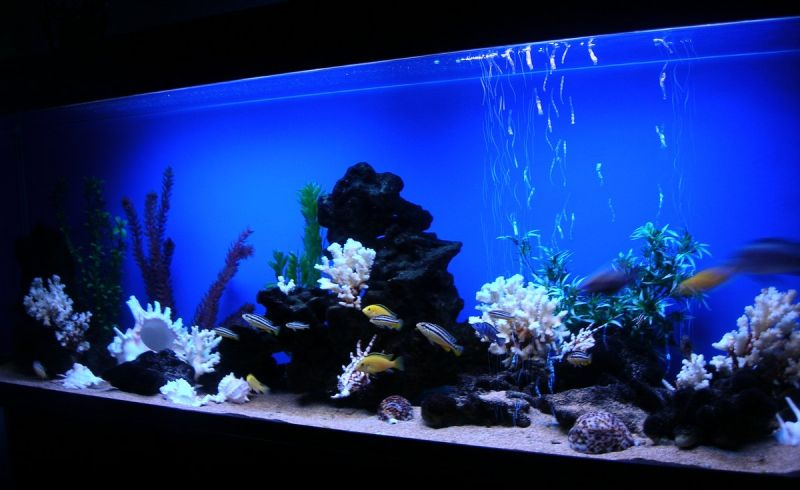 Дизайн аквариумов псевдоморе фото