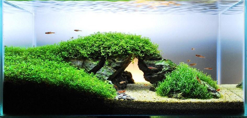 Оформления и дизайна аквариума