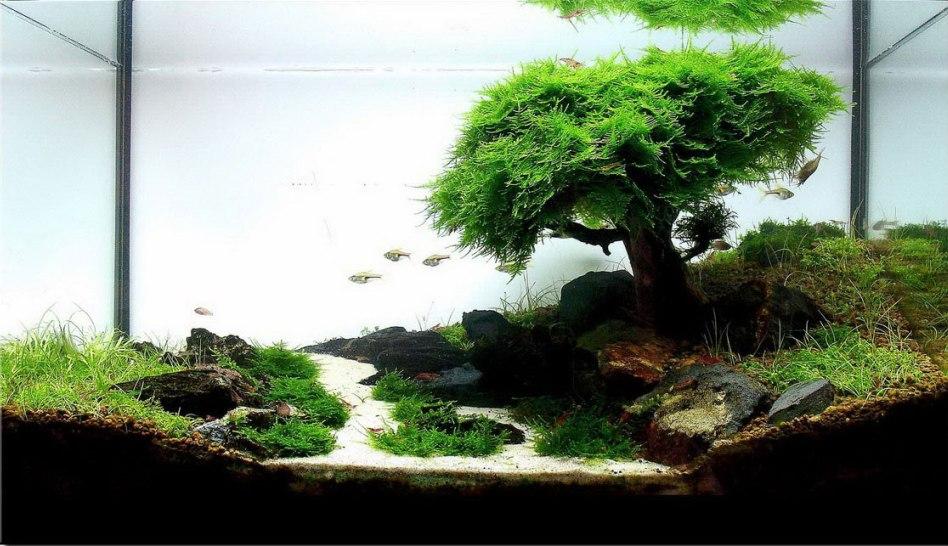 Дизайны аквариумов видео