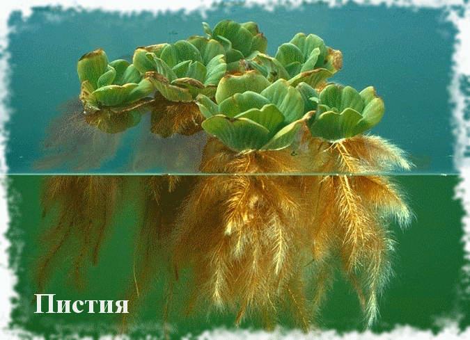 Фото растений встречающиеся в