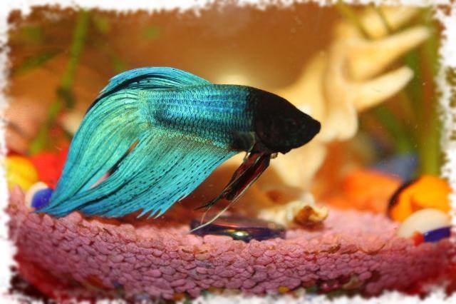 Фото рыб красивых