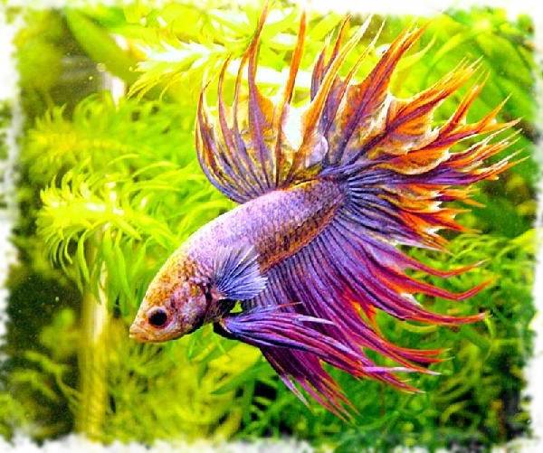 Самые красивые аквариумные рыбки: фото-видео обзор: http://fanfishka.ru/news/top_samykh_krasivykh_akvariumnykh_ryb_i_rybok/2013-06-21-822