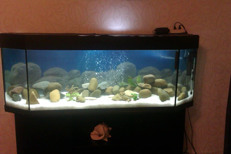 Как сделать аквариум своими руками из стекла: пошаговая инструкция 49