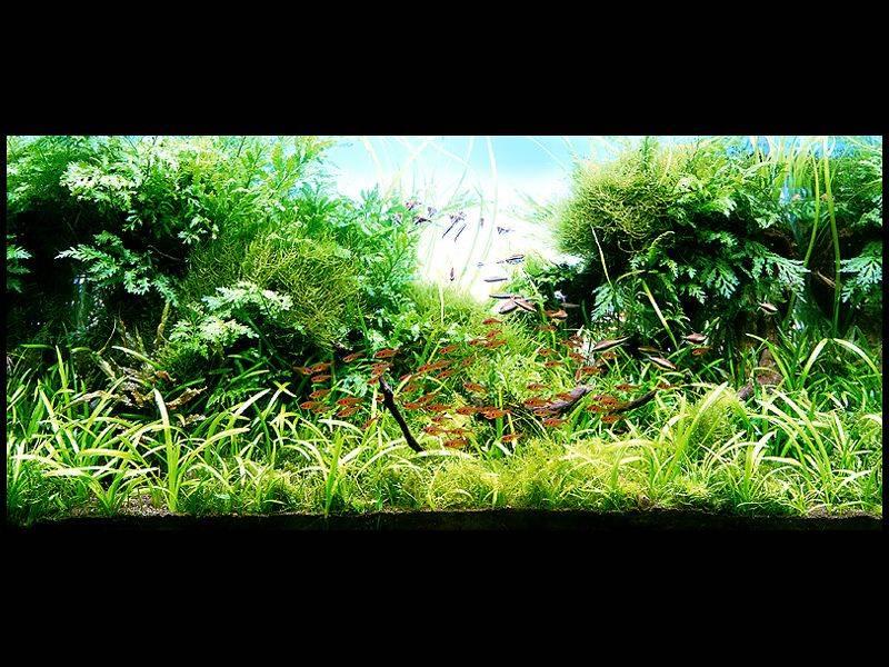 фото аквариумов с корягами и растениями