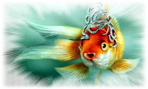 три желания для золотой рыбки фото #13