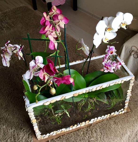 Во что сажают орхидеи 29