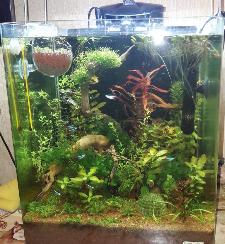 Растения в аквариуме сажают в 99