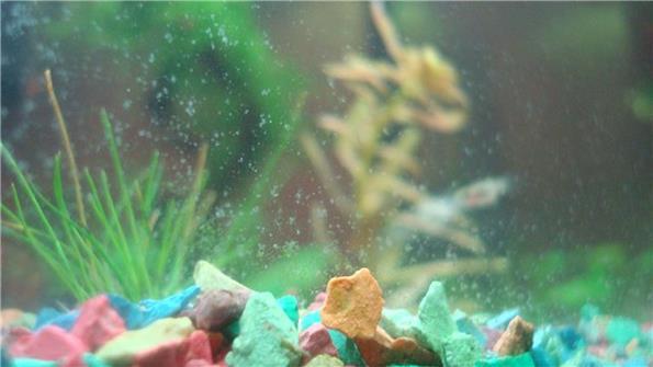 Налет на стенках и декорациях аквариума, что делать?