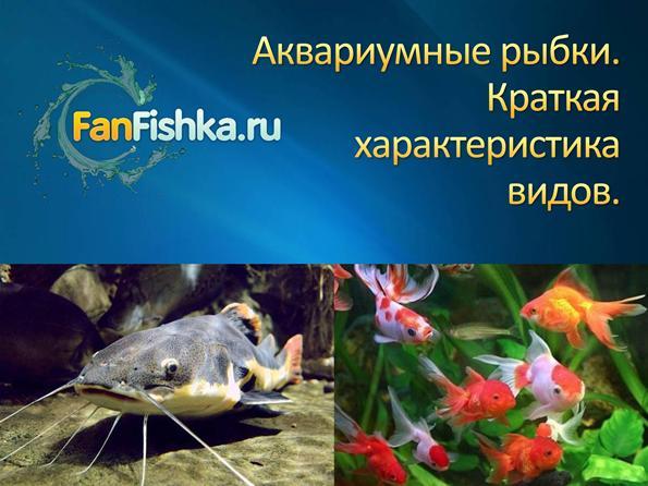 Уход за аквариумом и рыбками для начинающих