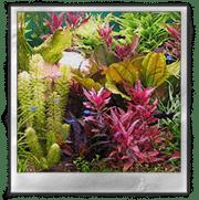 О пользе аквариумных растений