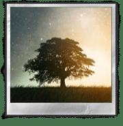 Акваскейп: через тернии к звездам