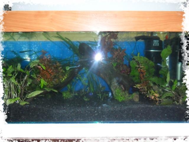 установка первого аквариума