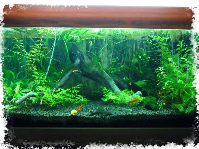 растения в первом аквариуме