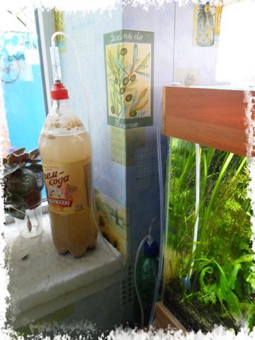 СО2 в первом аквариуме