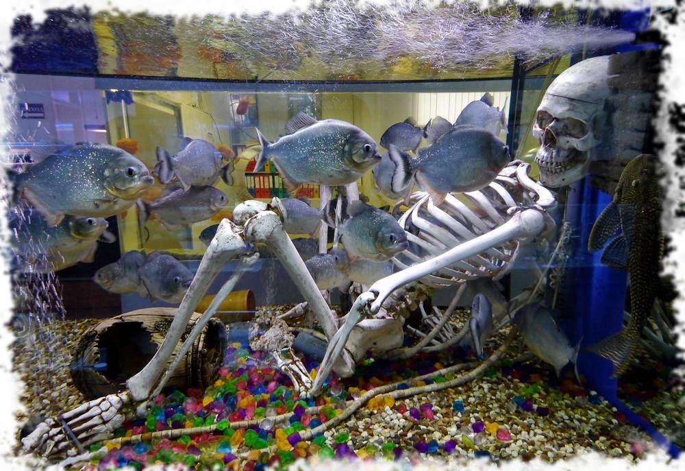 перечень аквариумных рыбок с фото