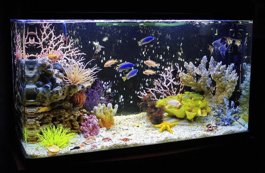 фоторгафия аквариума псевдоморье