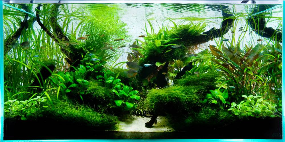 экосистема аквариума картинки сосредоточена