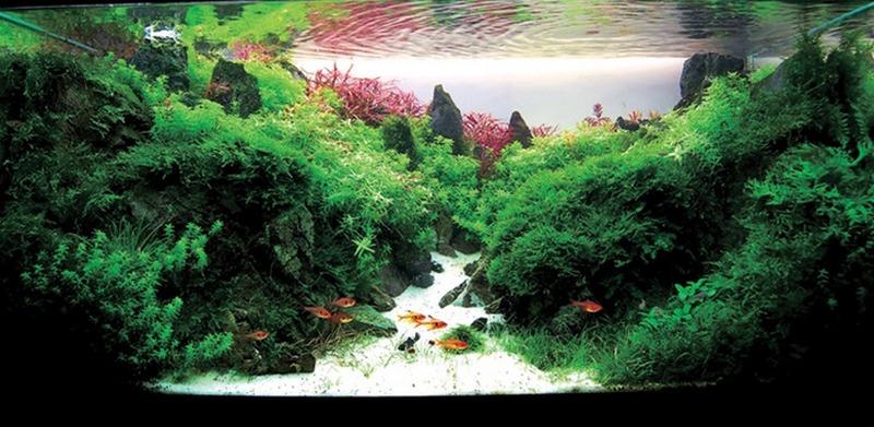 аквариум амано