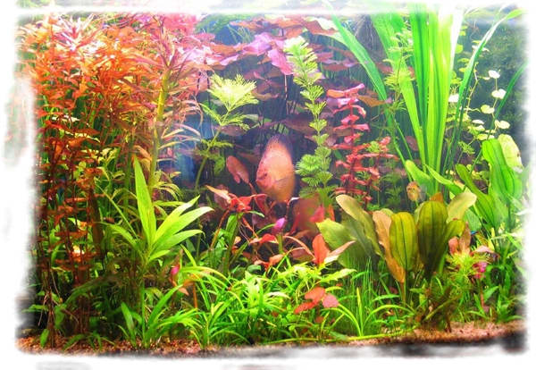 Как сделать кислород для аквариума в домашних условиях