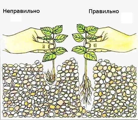 Правила посадки аквариуных растений