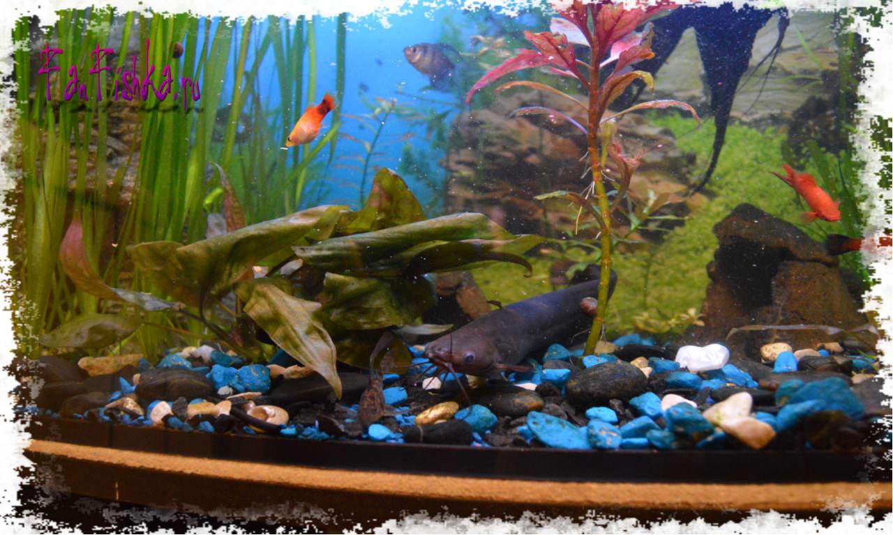 Названия аквариумных рыбок выбираем питомцев для аквариума