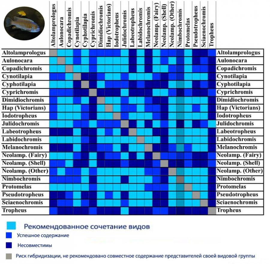 таблица совместимости рыб