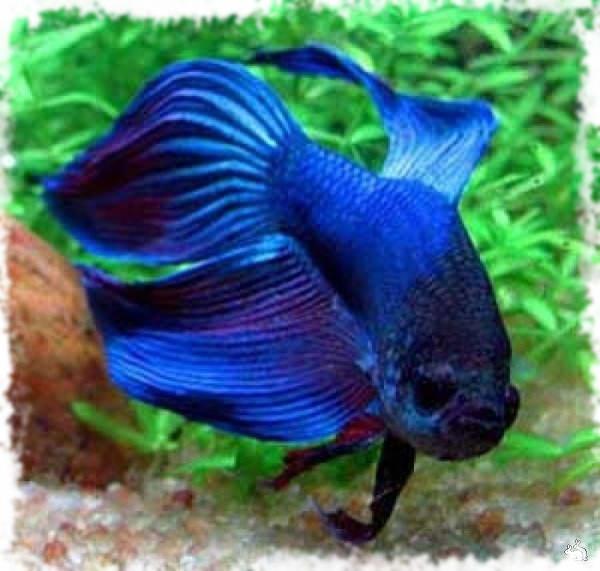 Картинки с аквариумными рыбками