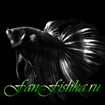 Продажа аквариумных растений Севастополь - последнее сообщение от Краснуша