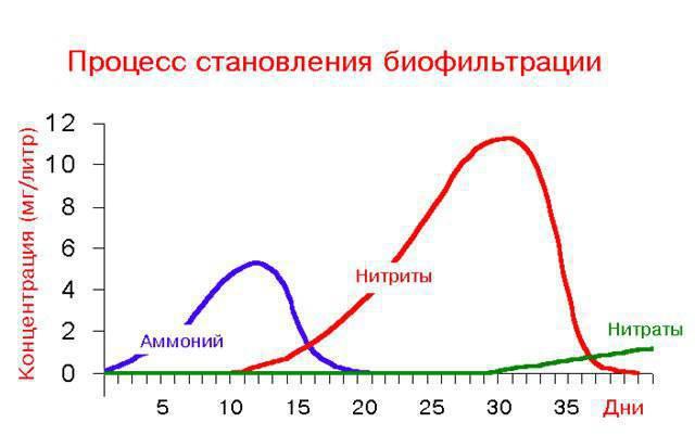 <a class='ff-auto-link'href='https://fanfishka.ru/akvariumnye-stati/poleznye_sovety_po_soderzhaniyu_rybok/1404-azotnyy-cikl-v-akvariume-broshyura-dlya-nachinayuschih.html' target='_blank'title='Статья на сайте ФФ' >азотный цикл</a> в аквариуме график