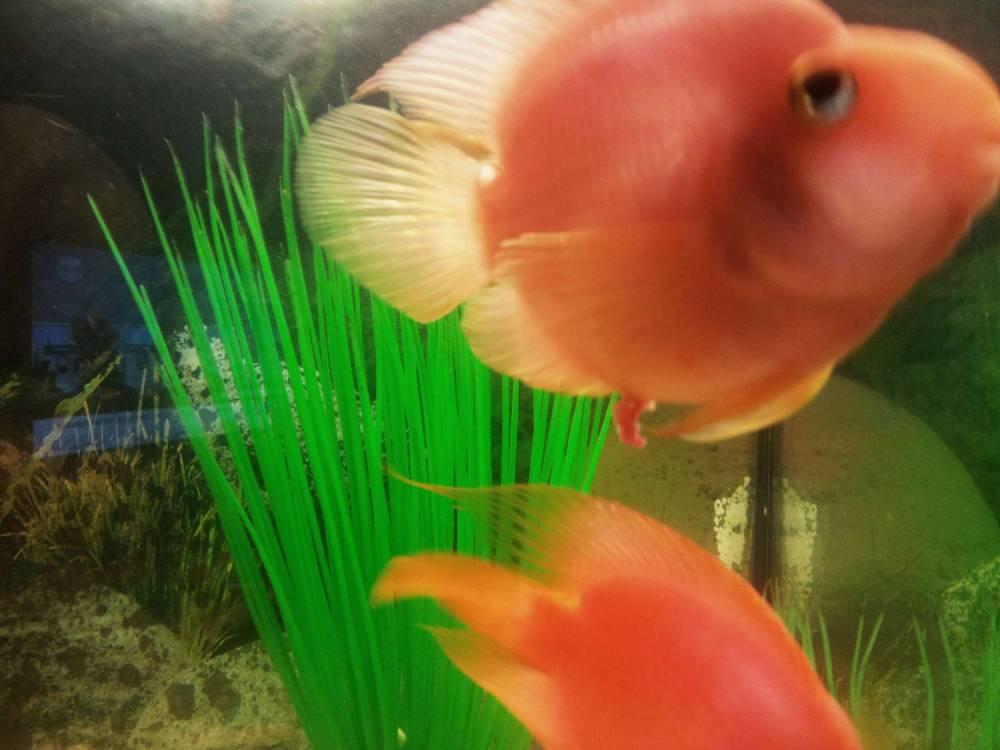Слизь у анального отверстия рыб