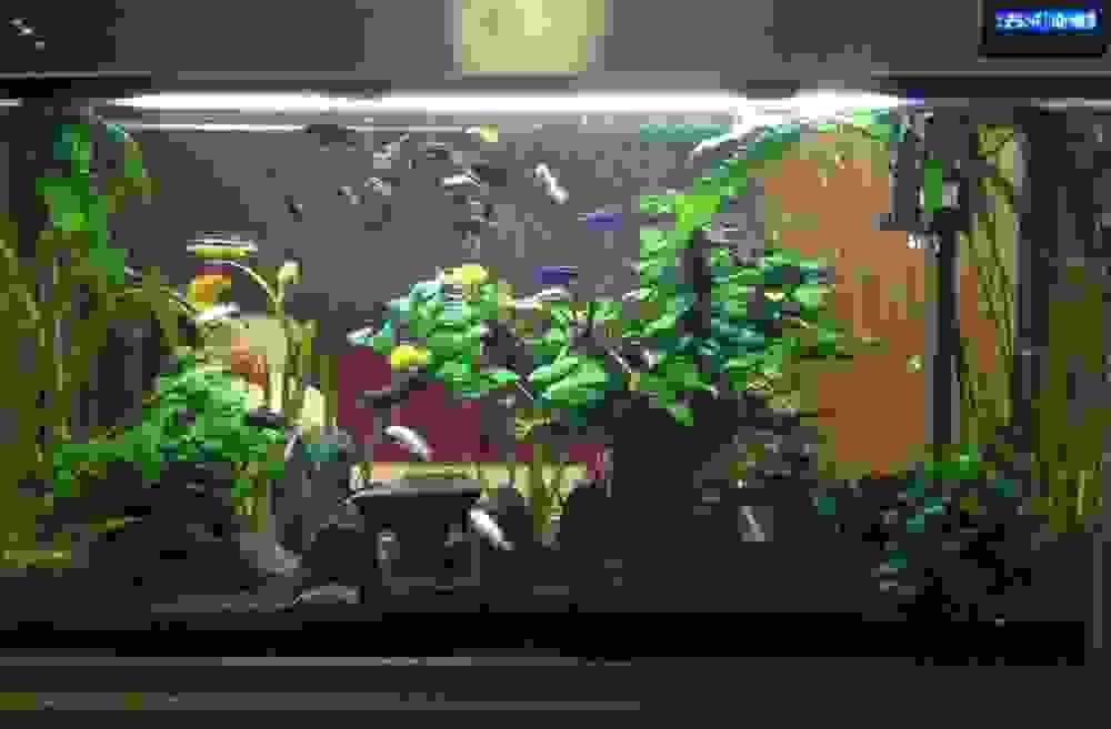 post-1252-0-57247200-1477468230_thumb.jpeg