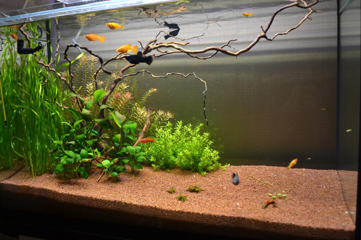 волосы фото аквариумов травников новые
