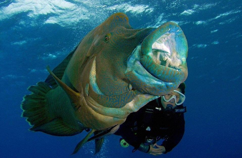 изменилось после рыбы гиганты фото новых