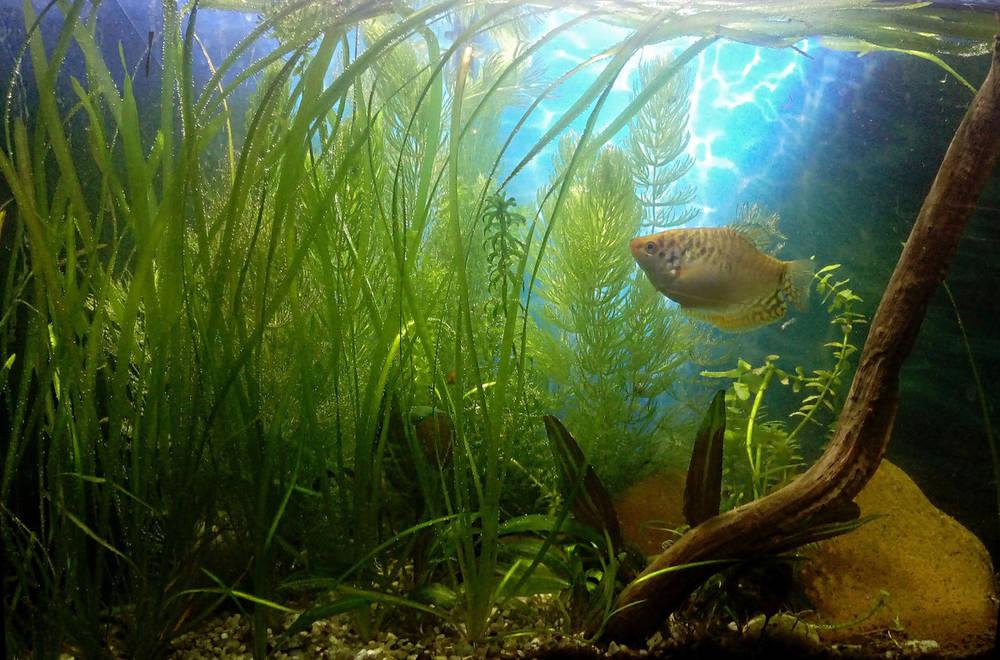 Просто аквариум.jpg