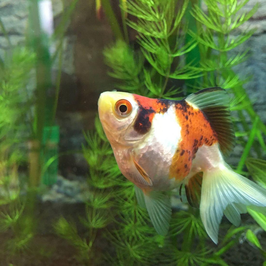 Рыбка поменяла цвет