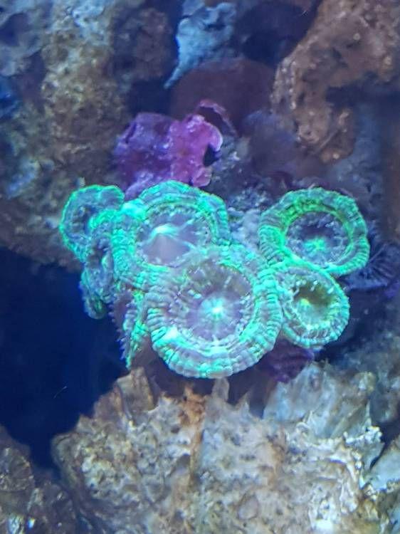 Запуск морского аквариума 90 литров