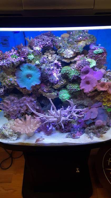 Морской аквариум 90 литров Resun-DMS-500