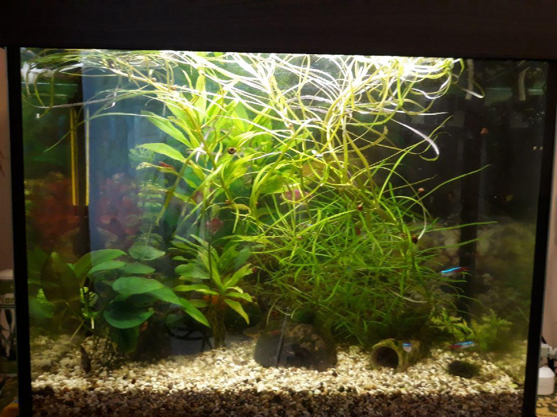 аквариум с моллинезиями фото временем