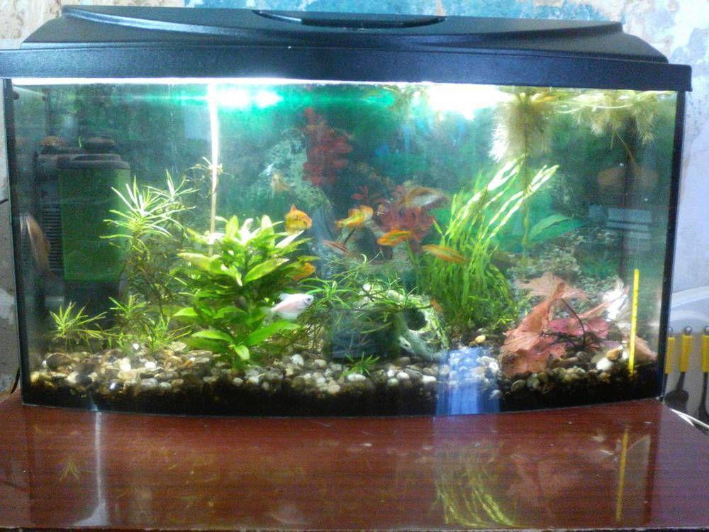 Помогите с освещением аквариума 75 литров