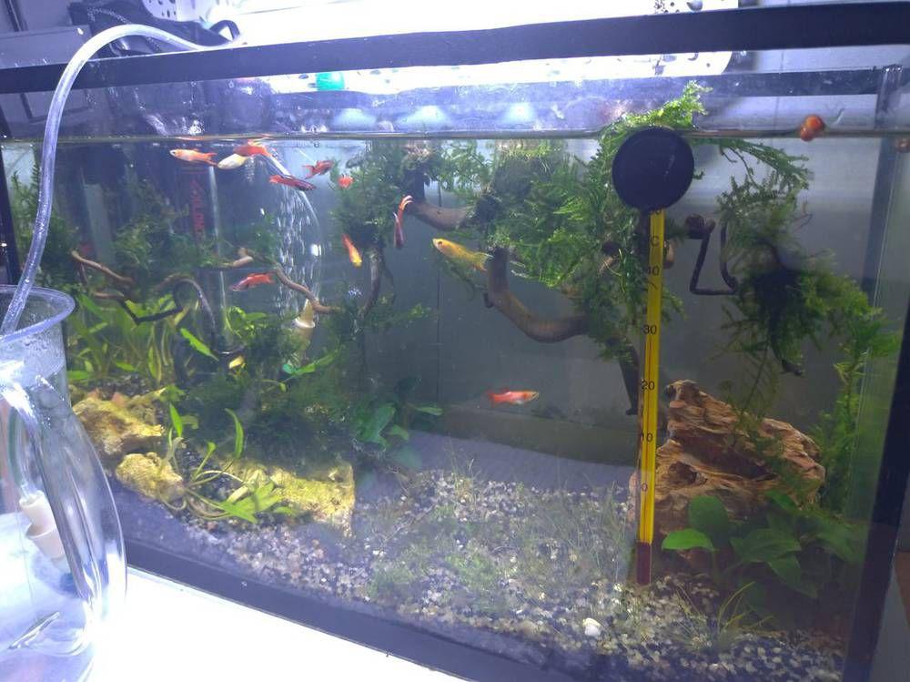 засранный аквариум