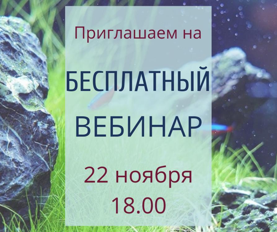 БЕСПЛАТНЫЙ ВЕБИНАР (1).png