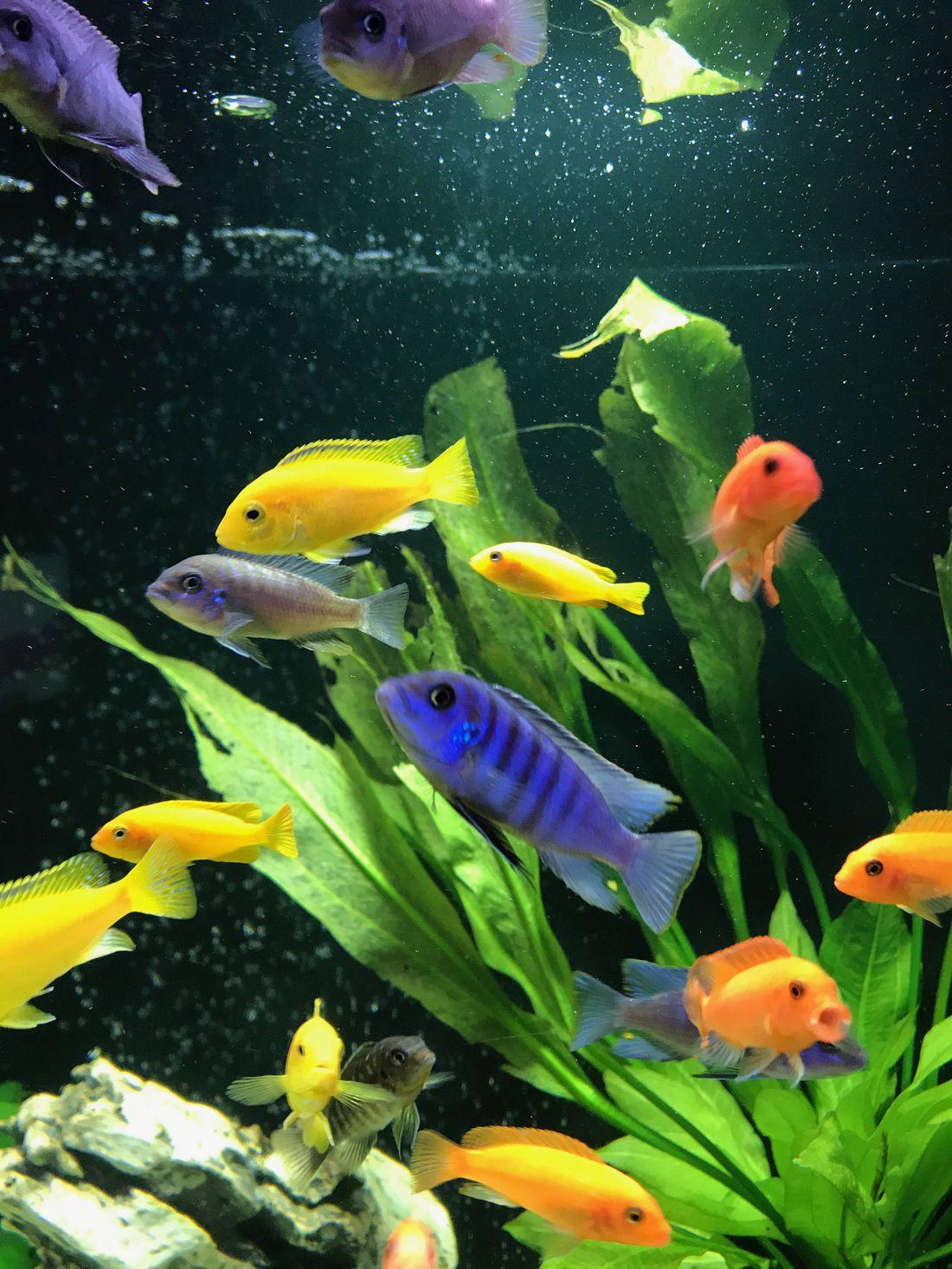 картинки всех рыбок в аквариуме разместили сайте
