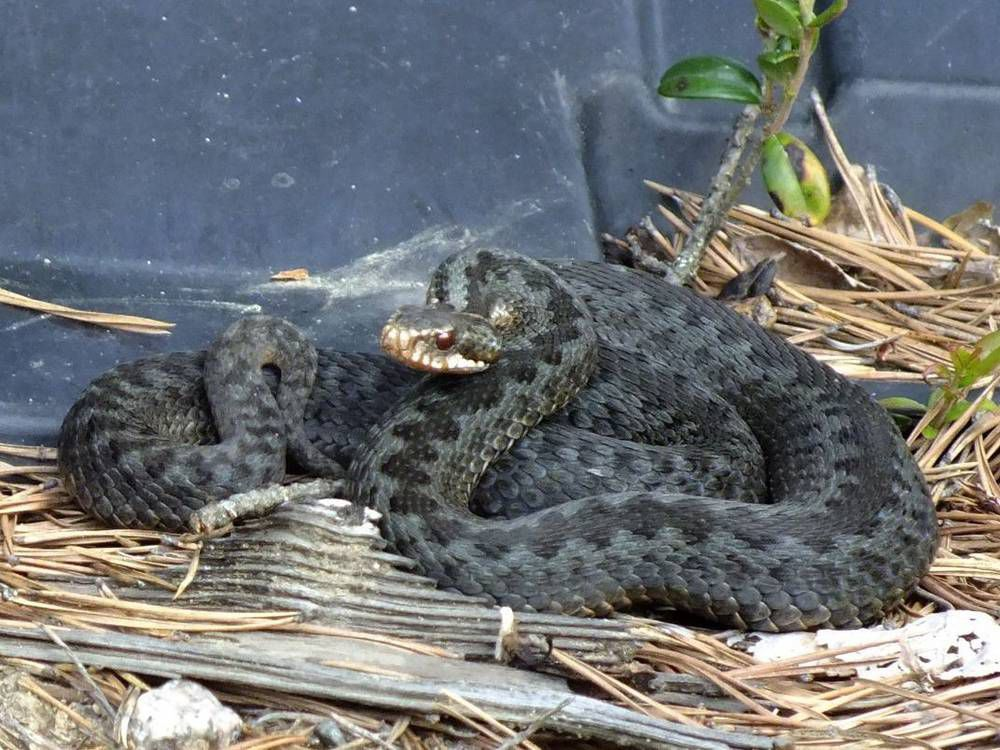 Змея.jpg