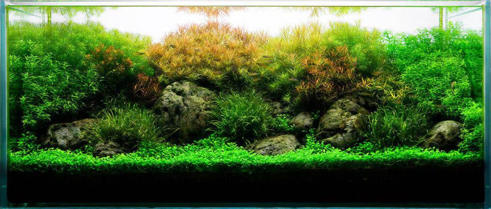 Параметры воды для аквариума с растениями - травника