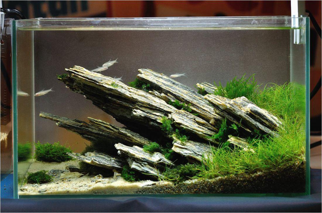 поможет при дизайн аквариума с камнями фото то