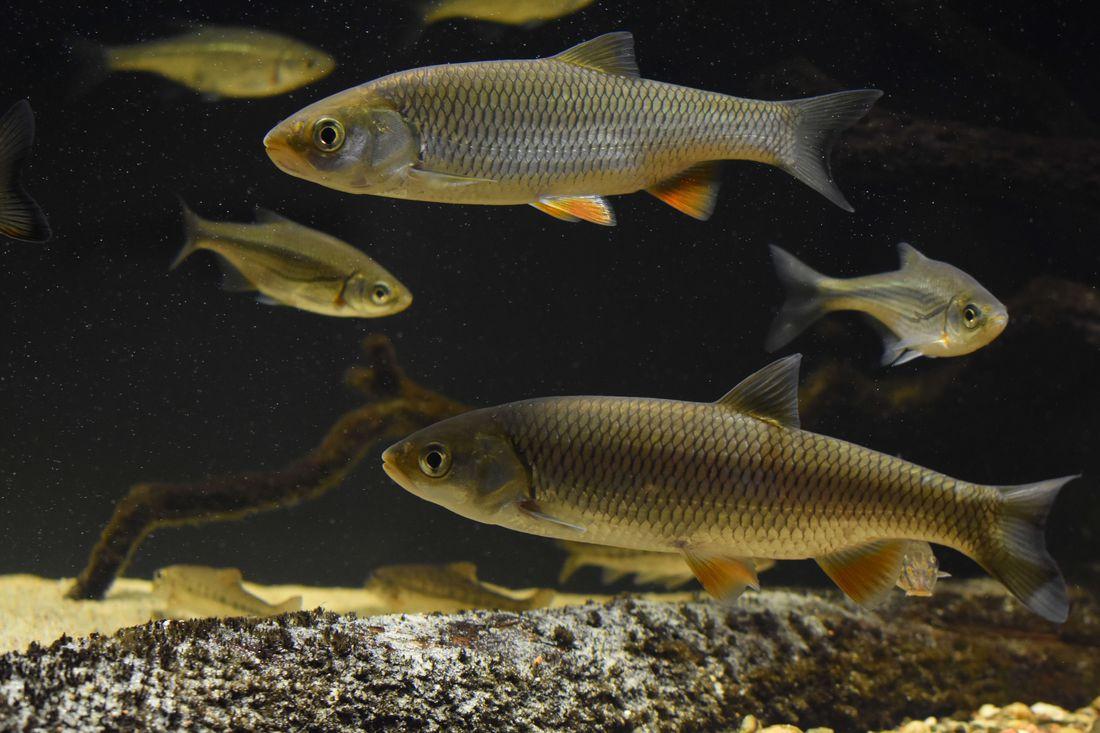 сообщении рыбы средней полосы россии картинки слову, родители достаточно