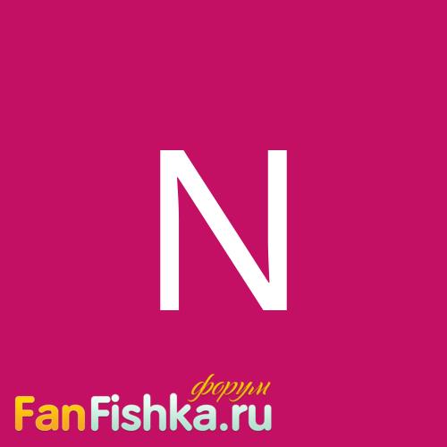 novi4ek