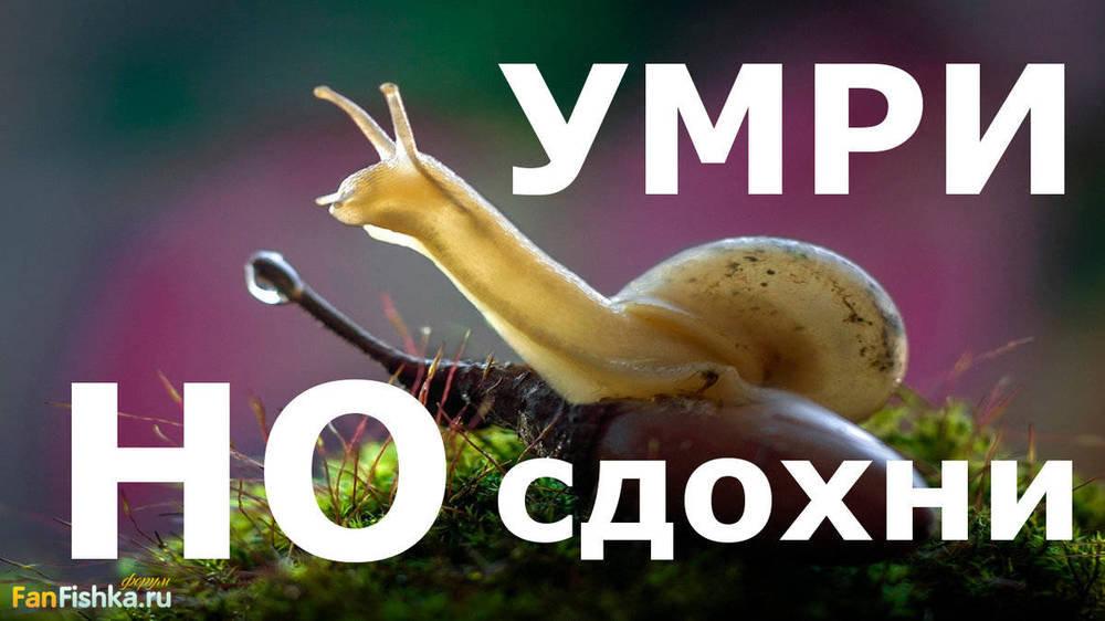 Как избавиться от улиток в аквариуме