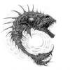 Гидры и черви в аквариуме с креветками - последнее сообщение от Pirani@