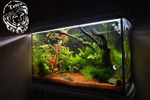 Что делать с взвесью в аквариуме 2